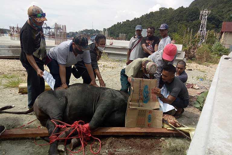 Sekwan dan Anggota DPR Papua Beri Bantuan Hewan Qurban