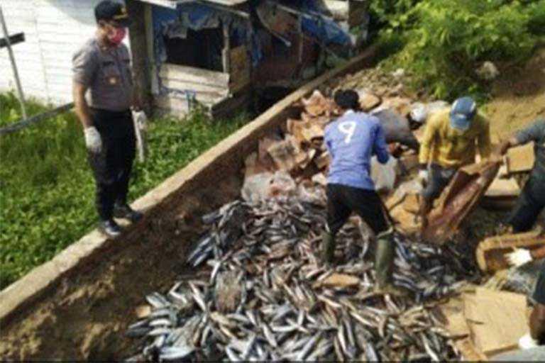 pemusnahan ikan yang busuk di merauke